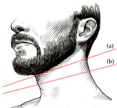 life4beard.ru адамово-яблоко линия шеи бороды