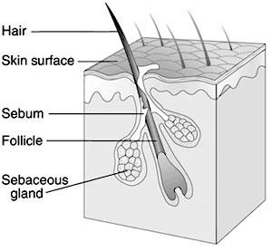 бальзам для бороды масло для бороды уход за бородой борода сухая бородач увлажнение волос кожи beard balm oil wax butter carrier oil essential oil